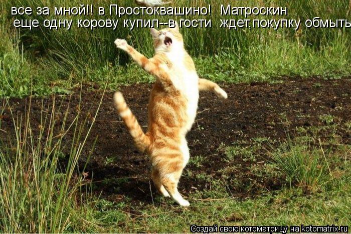Котоматрица: все за мной!! в Простоквашино!  Матроскин   еще одну корову купил--в гости  ждет,покупку обмыть!