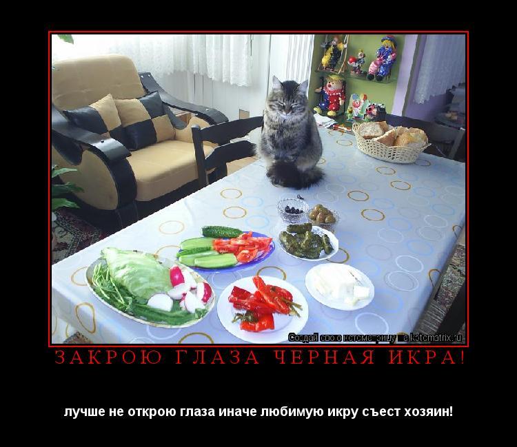 http://kotomatrix.ru/images/lolz/2012/02/17/w.jpg