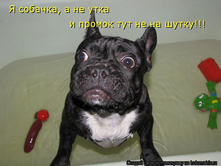 Котоматрица: Я собачка, а не утка и промок тут не на шутку!!!