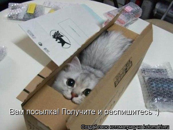 Котоматрица: Вам посылка! Получите и распишитесь :)