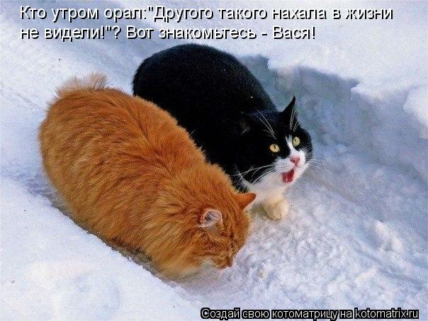 """Котоматрица: Кто утром орал:""""Другого такого нахала в жизни не видели!""""? Вот знакомьтесь - Вася!"""