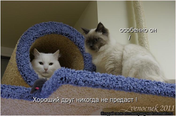 Странно мне такое говорить потому, что я очень люблю всех котов и кошек.