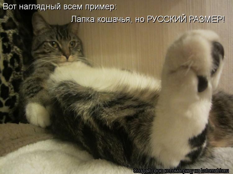 Котоматрица: Вот наглядный всем пример: Лапка кошачья, но РУССКИЙ РАЗМЕР!