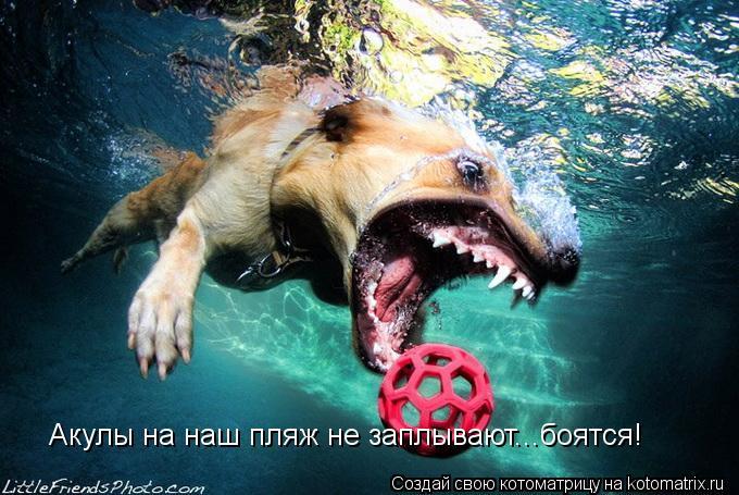 Котоматрица: Акулы на наш пляж не заплывают...боятся!