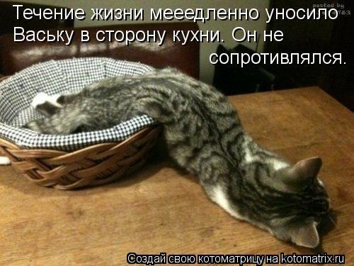 Котоматрица: Течение жизни мееедленно уносило Ваську в сторону кухни. Он не сопротивлялся.