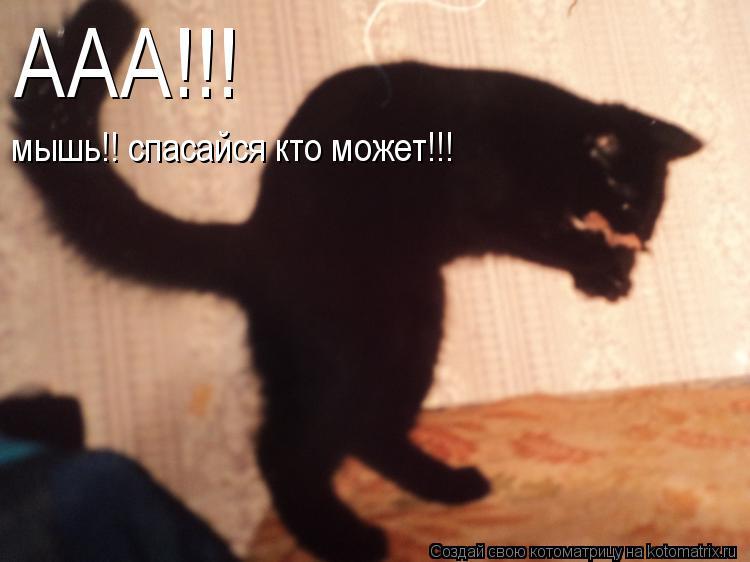 Котоматрица: мышь!! спасайся кто может!!! ААА!!!