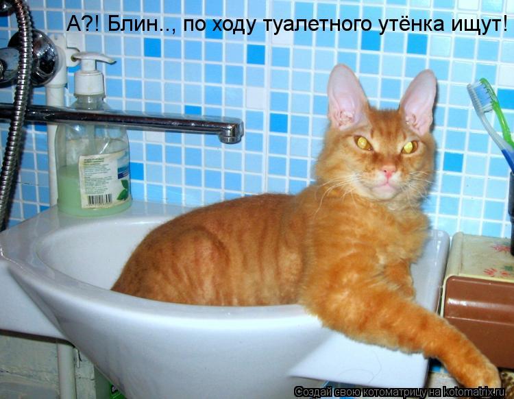 Котоматрица: А?! Блин.., по ходу туалетного утёнка ищут!