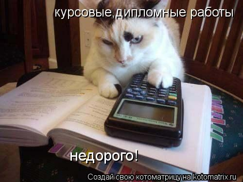 Котоматрица: курсовые,дипломные работы недорого!