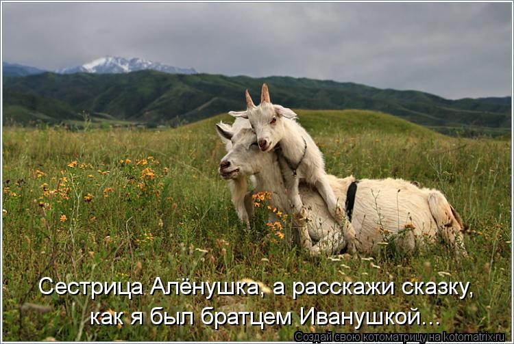 Котоматрица: Сестрица Алёнушка, а расскажи сказку, как я был братцем Иванушкой...
