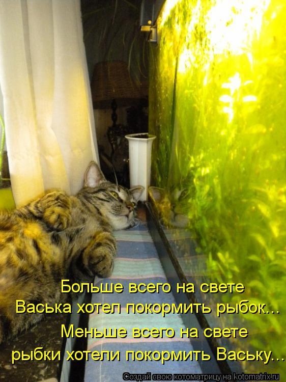 Котоматрица: Больше всего на свете Васька хотел покормить рыбок... Меньше всего на свете рыбки хотели покормить Ваську...