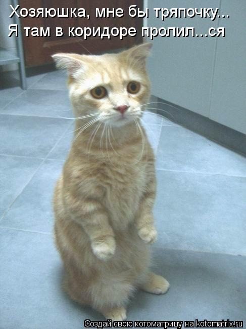 Котоматрица: Хозяюшка, мне бы тряпочку... Я там в коридоре пролил...ся