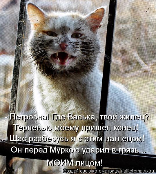 Котоматрица: - Петровна! Где Васька, твой жилец? Терпенью моему пришел конец! Щас разберусь я с этим наглецом! Он перед Муркою ударил в грязь... МОИМ лицом!