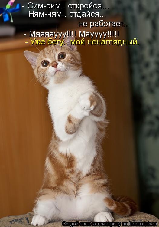 Котоматрица: - Сим-сим.. откройся... Ням-ням.. отдайся... не работает... - Мяяяяууу!!!! Мяуууу!!!!! - Уже бегу.. мой ненаглядный.