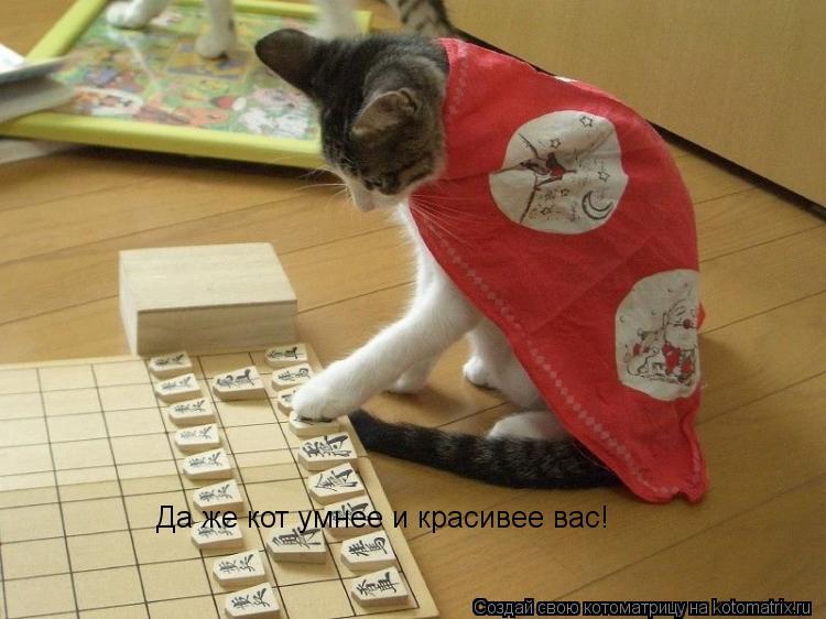 Котоматрица: Да же кот умнее и красивее вас!