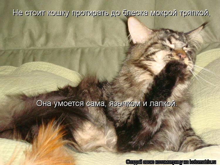 Котоматрица: Не стоит кошку протирать до блеска мокрой тряпкой, Она умоется сама, язычком и лапкой.