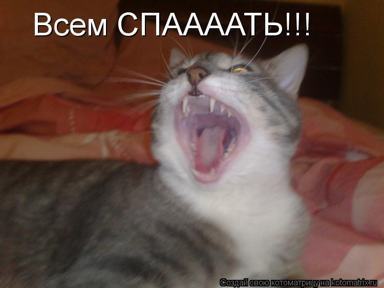 Котоматрица: Всем СПААААТЬ!!!