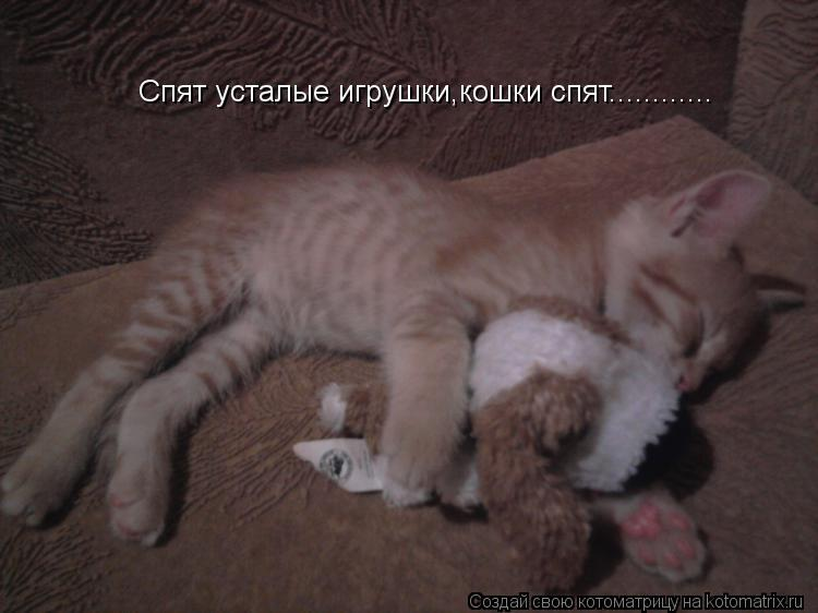 Котоматрица: Спят усталые игрушки,кошки спят............