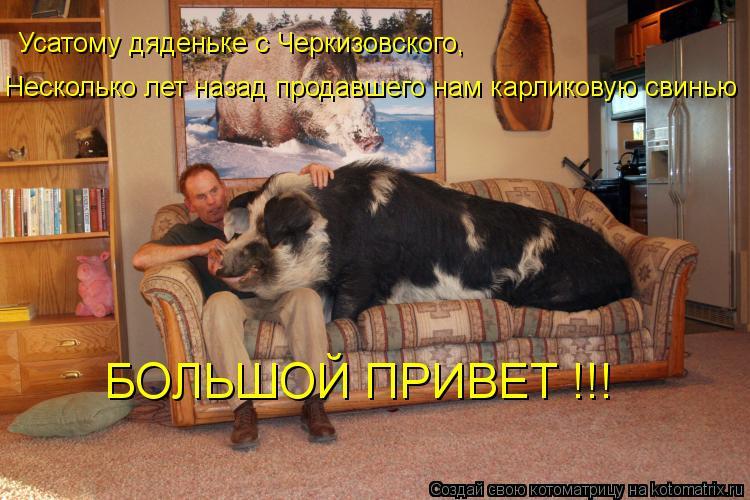Котоматрица: Усатому дяденьке с Черкизовского, Несколько лет назад продавшего нам карликовую свинью БОЛЬШОЙ ПРИВЕТ !!!