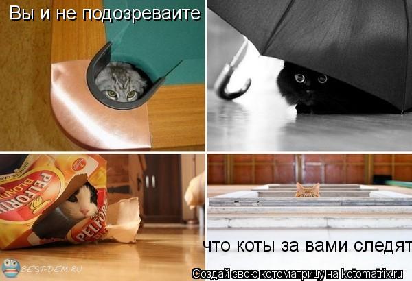 Котоматрица: Вы и не подозреваите что коты за вами следят