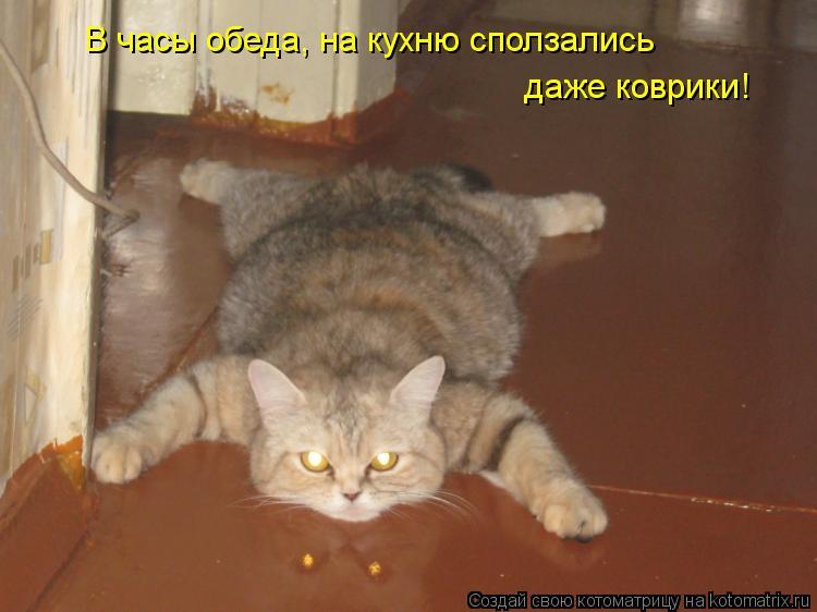 Котоматрица - В часы обеда, на кухню сползались даже коврики!