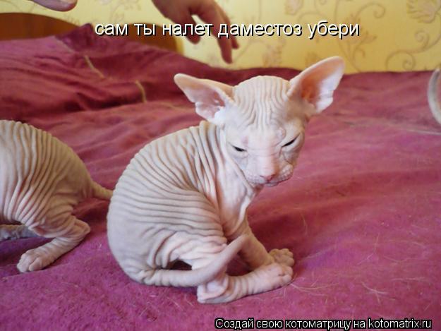 skolko-spermatozoidov-videlyaetsya-v-sutki