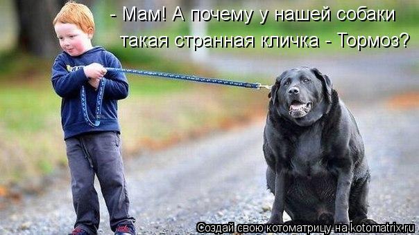 Котоматрица - - Мам! А почему у нашей собаки такая странная кличка - Тормоз?