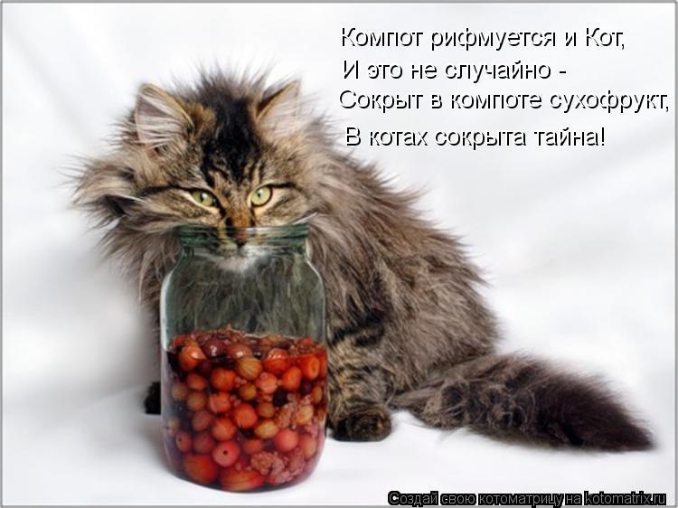 Котоматрица: Компот рифмуется и Кот, И это не случайно - Сокрыт в компоте сухофрукт, В котах сокрыта тайна!