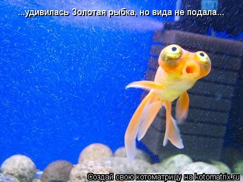 Котоматрица: ...удивилась Золотая рыбка, но вида не подала...