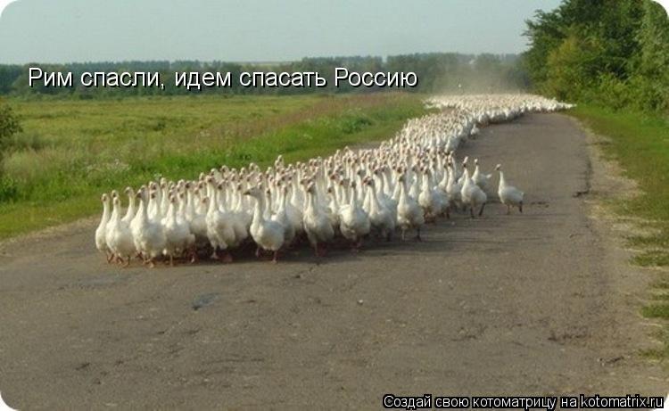Котоматрица: Рим спасли, идем спасать Россию