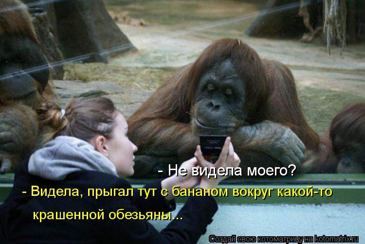 Котоматрица: - Не видела моего?  - Видела, прыгал тут с бананом вокруг какой-то  крашенной обезьяны...