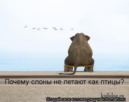 Котоматрица: Почему слоны не летают как птицы?