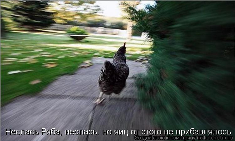 Котоматрица - Неслась Ряба, неслась, но яиц от этого не прибавлялось