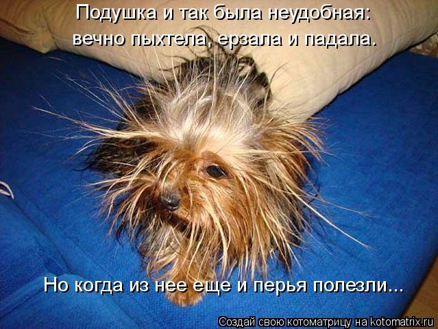 Котоматрица: Подушка и так была неудобная: вечно пыхтела, ерзала и падала. Но когда из нее еще и перья полезли...