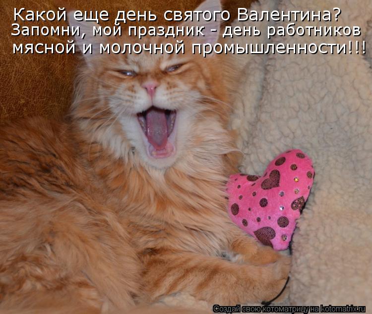 Котоматрица - Какой еще день святого Валентина? мясной и молочной промышленности!!!