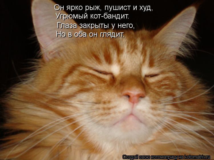 Котоматрица: Он ярко рыж, пушист и худ, Угрюмый кот-бандит. Глаза закрыты у него, Но в оба он глядит.