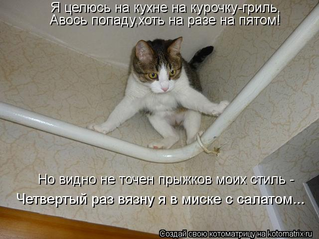 Котоматрица - Я целюсь на кухне на курочку-гриль, Авось попаду,хоть на разе на пятом