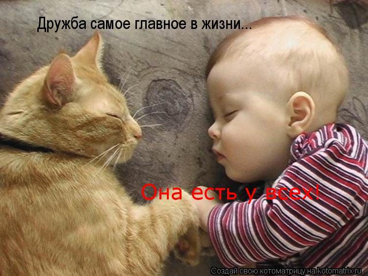 Котоматрица: Дружба самое главное в жизни... Она есть у всех!