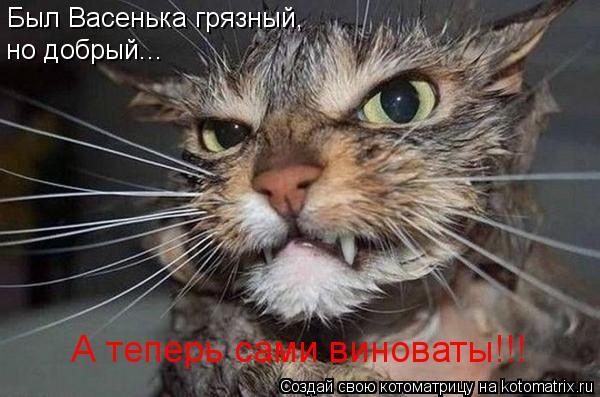 Котоматрица: Был Васенька грязный, но добрый... А теперь сами виноваты!!!