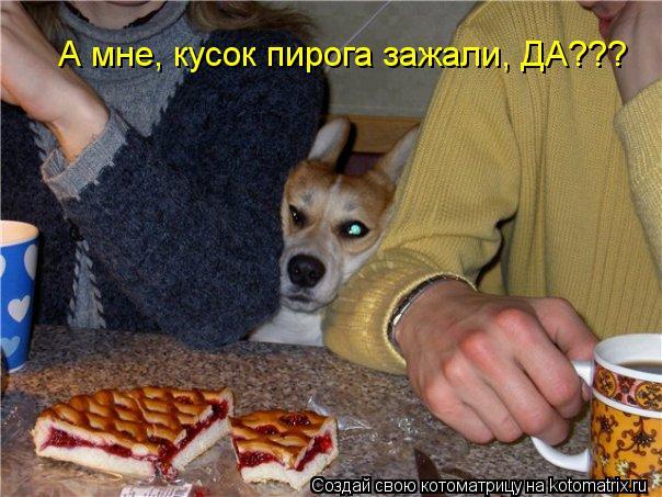 Котоматрица - А мне, кусок пирога зажали, ДА???