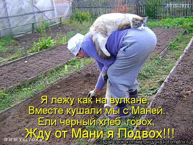Котоматрица: Я лежу как на вулкане, Вместе кушали мы с Маней. Ели черный хлеб, горох, Жду от Мани я Подвох!!!