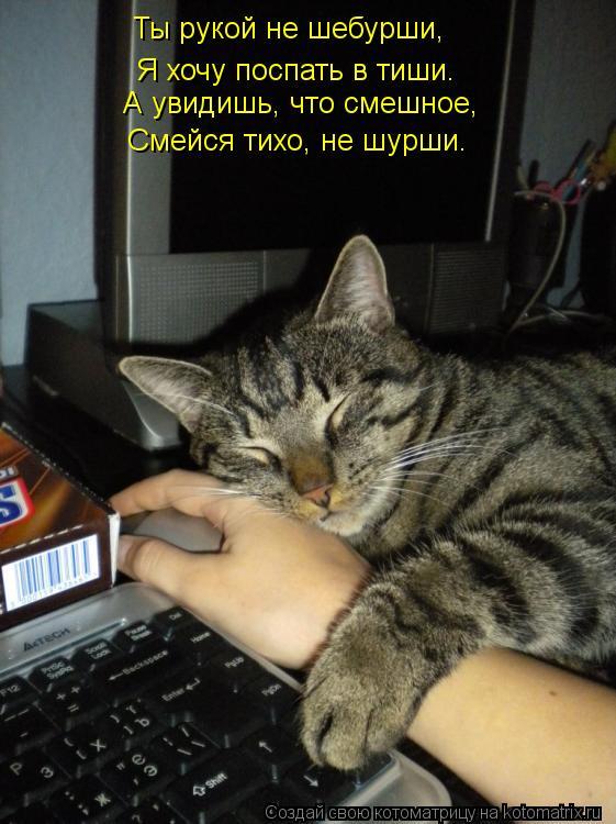 Котоматрица: Ты рукой не шебурши, Я хочу поспать в тиши. А увидишь, что смешное, Смейся тихо, не шурши.