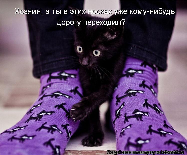Котоматрица - Хозяин, а ты в этих носках уже кому-нибудь  дорогу переходил?