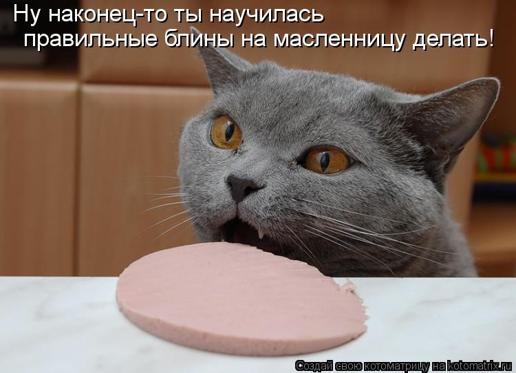 Котоматрица - Ну наконец-то ты научилась  правильные блины на масленницу делать!