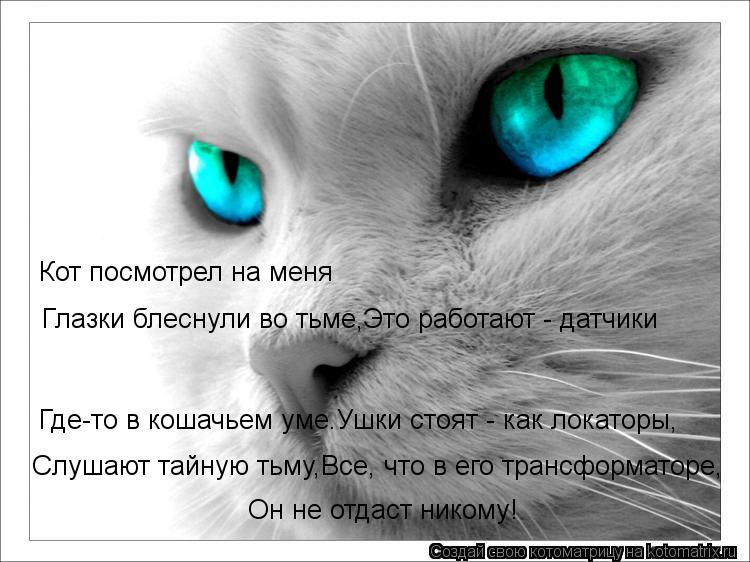 Котоматрица: Глазки блеснули во тьме,Это работают - датчики Кот посмотрел на меня Где-то в кошачьем уме.Ушки стоят - как локаторы, Слушают тайную тьму,Все,