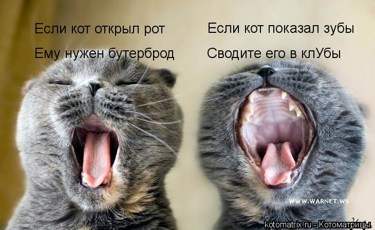 Котоматрица: Если кот открыл рот Ему нужен бутерброд Если кот показал зубы Сводите его в клУбы