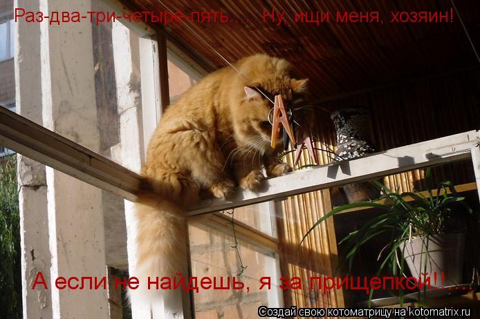 Котоматрица: Раз-два-три-четыре-пять....  Ну, ищи меня, хозяин! А если не найдешь, я за прищепкой!!....