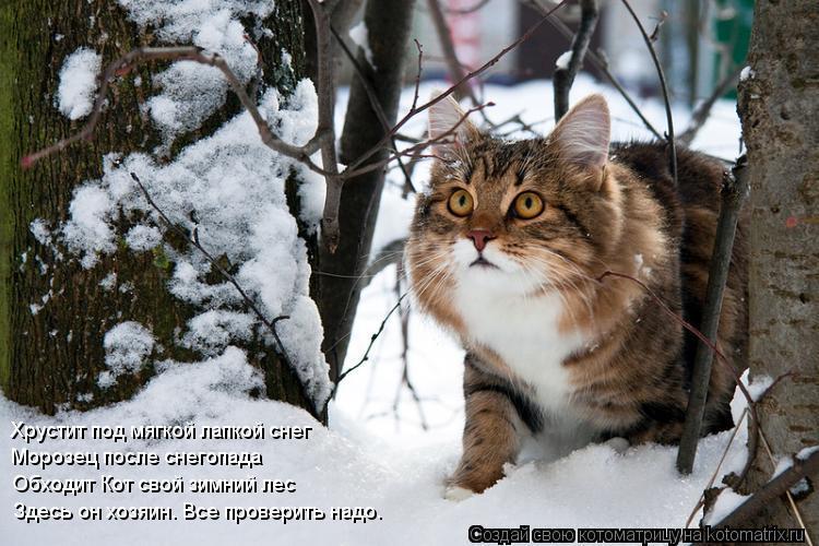 Котоматрица: Хрустит под мягкой лапкой снег Морозец после снегопада Обходит Кот свой зимний лес Здесь он хозяин. Все проверить надо.