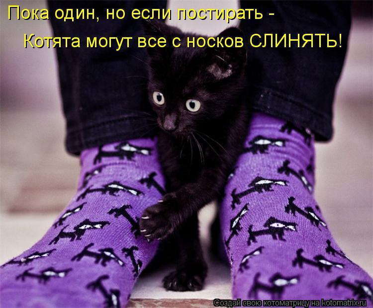 Котоматрица: Пока один, но если постирать -   Котята могут все с носков СЛИНЯТЬ!