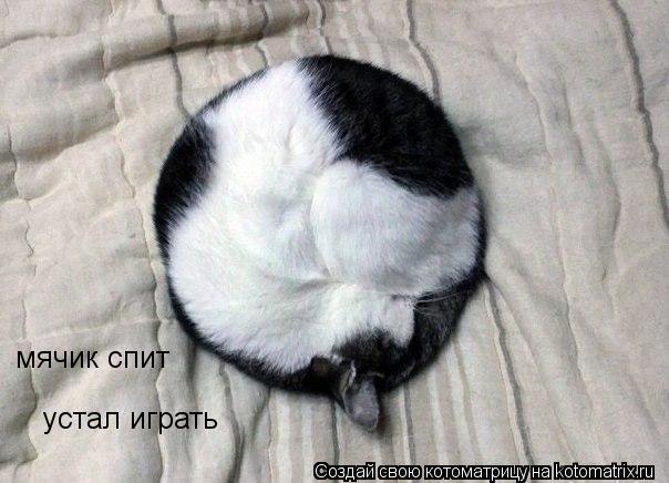 Котоматрица: мячик спит устал играть