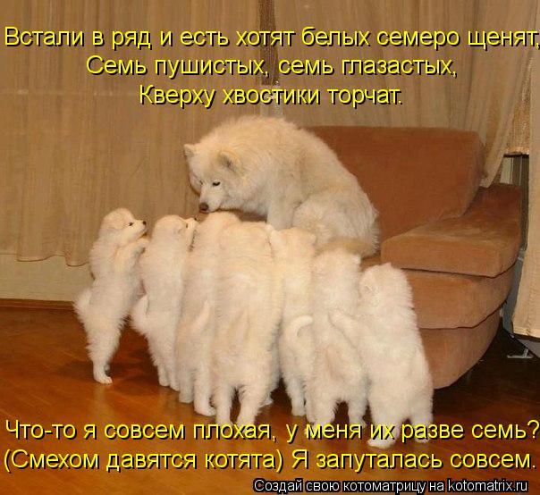 Котоматрица: Встали в ряд и есть хотят белых семеро щенят, Семь пушистых, семь глазастых, Кверху хвостики торчат. Что-то я совсем плохая, у меня их разве с
